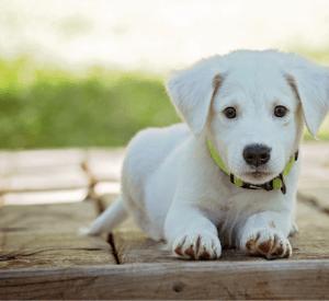 Feng Shui e animais de estimação
